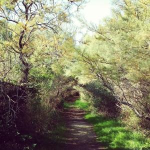 Il viale delle Tamerici presso l'oasi della Lipu dedicato alle saline di Priolo Gargallo (SR): la bellezza di un'idea nonostante la presenza incombente della raffineria.